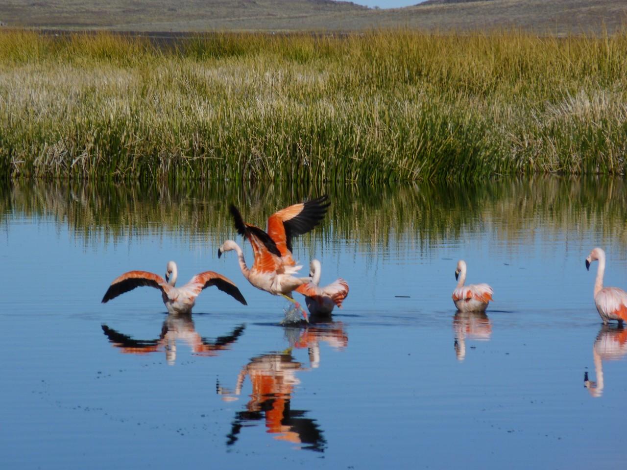 Observación de aves en el parque tromen- Foto de guaradaparque rodolfo Freyre