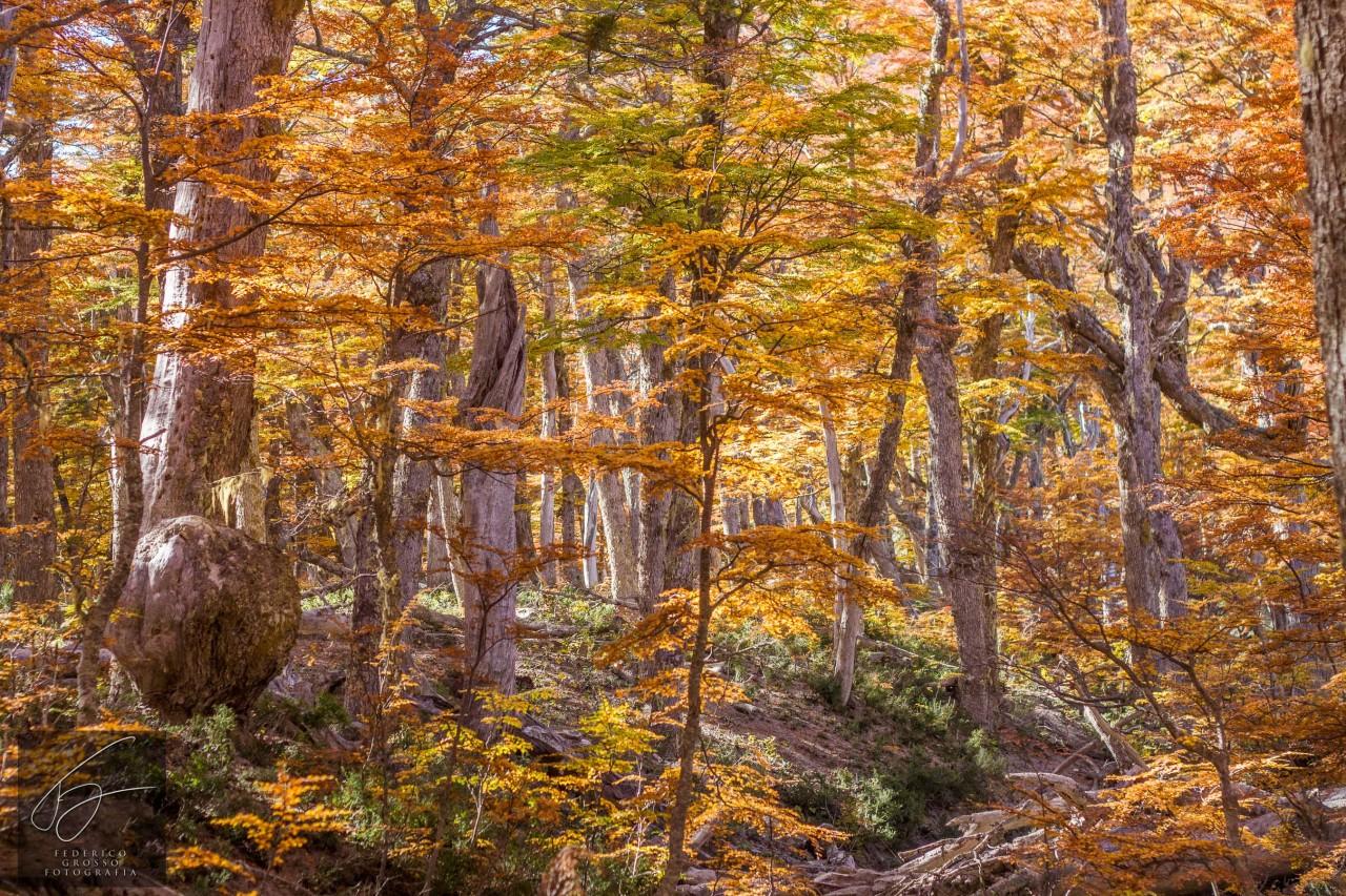 otoño en bosque andino
