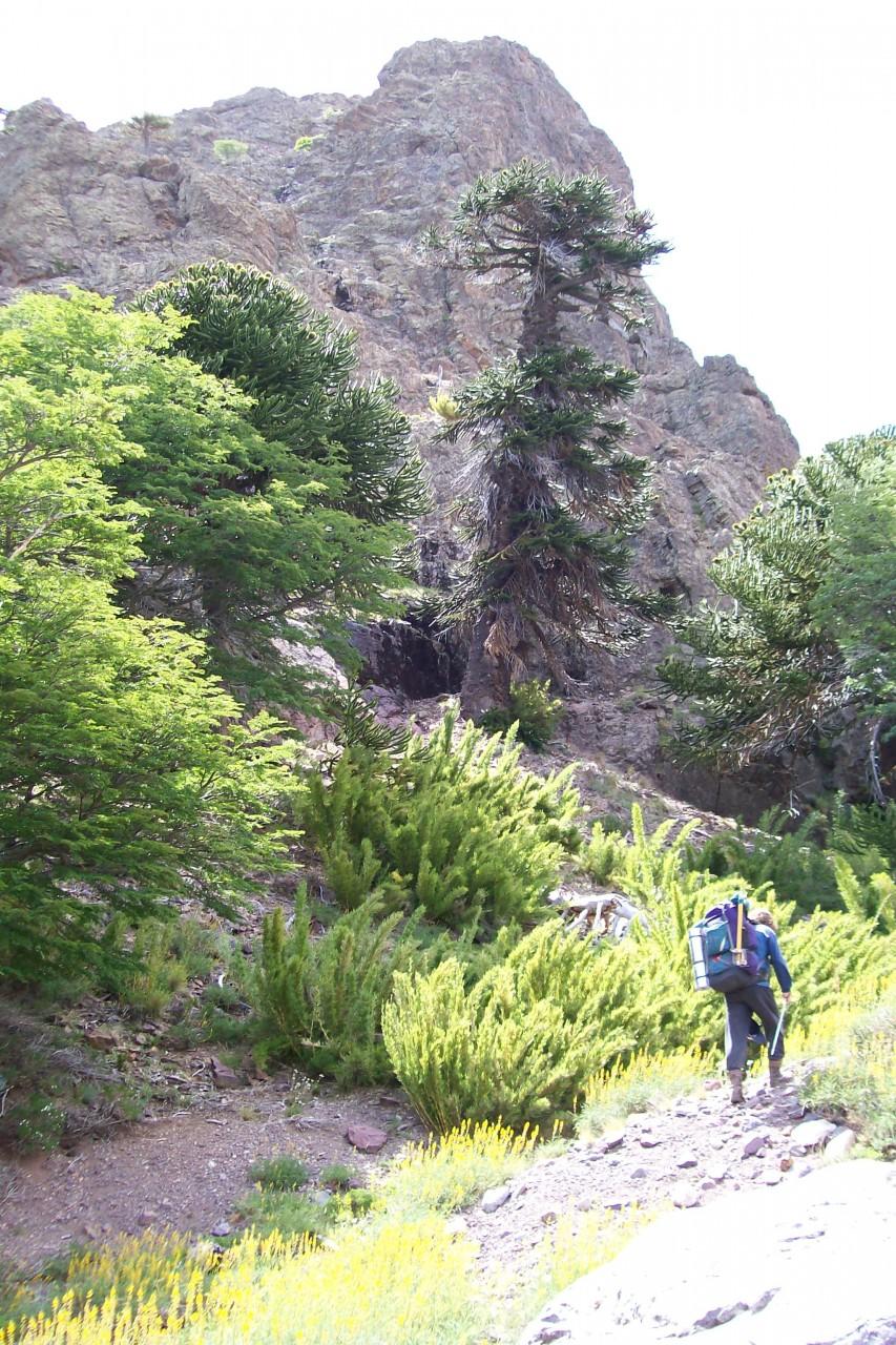 Camino al cerro Chachil, disfrutando de un entorno maravilloso