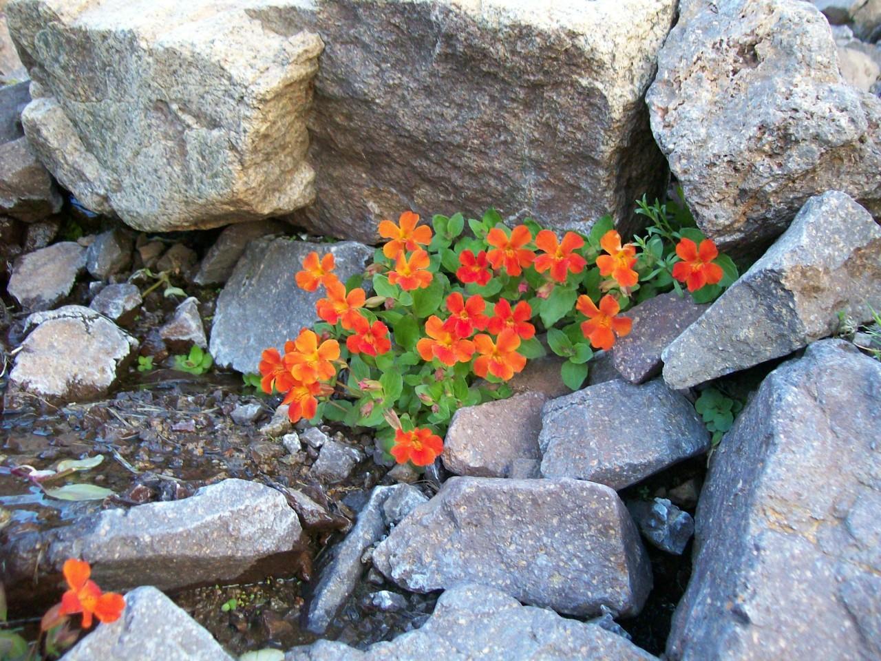 Aprovechando la generosa humedad de la zona, crecen cientos de especies con flores de llamativos colores