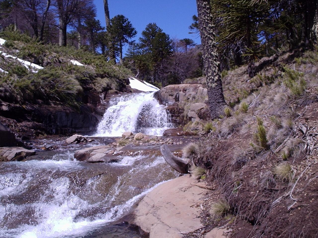 Arroyo Guayapa cerca de Primeros Pinos