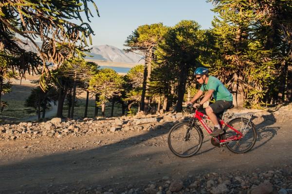 Caviahue_mountain-bike_bosque_028