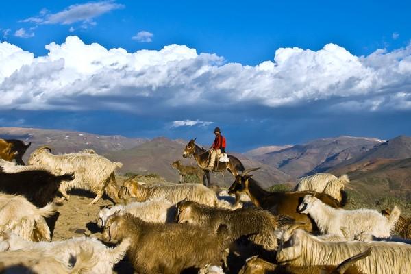 El-Norte-priorizará-la-ganadería-caprina-y-el-turismo