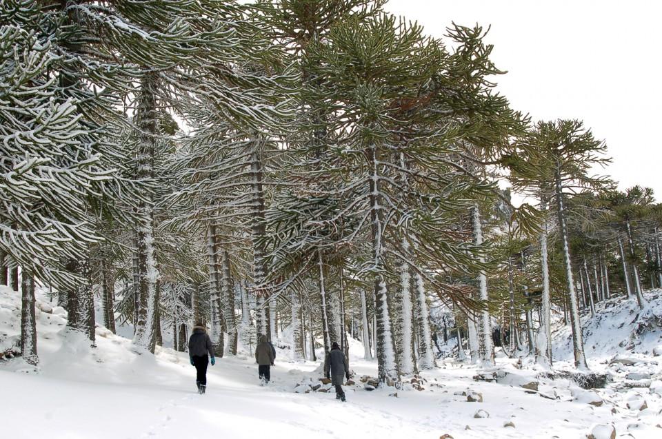 primeros pinos 074