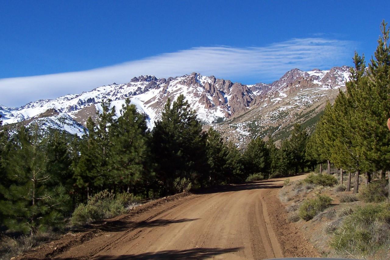 ruta rogelio figueroa forestación huinganco